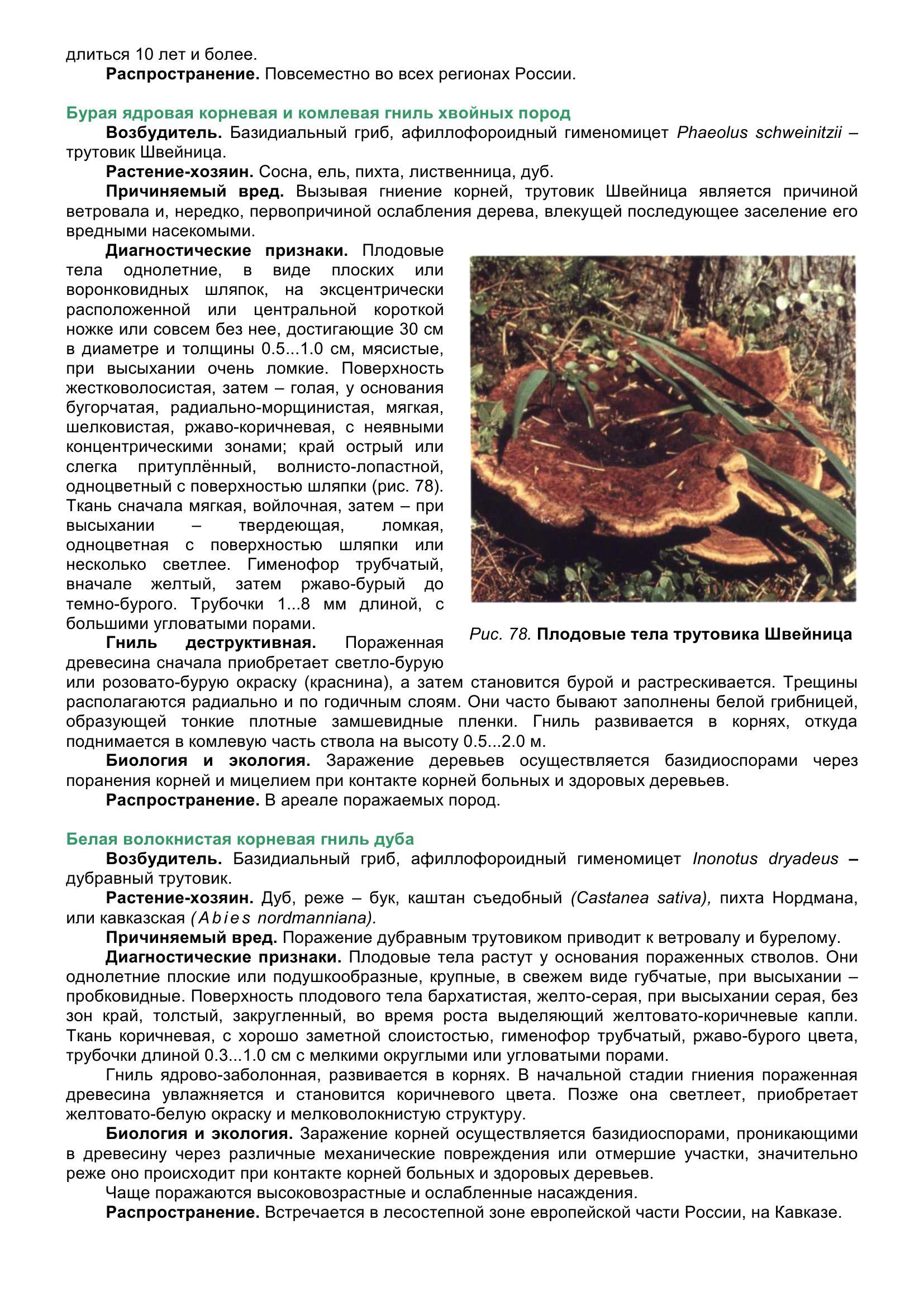 Болезни_древесных_растений_091.jpg