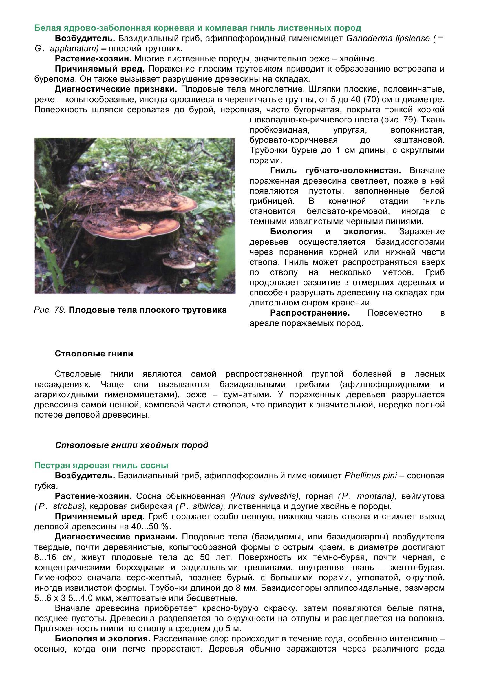 Болезни_древесных_растений_092.jpg