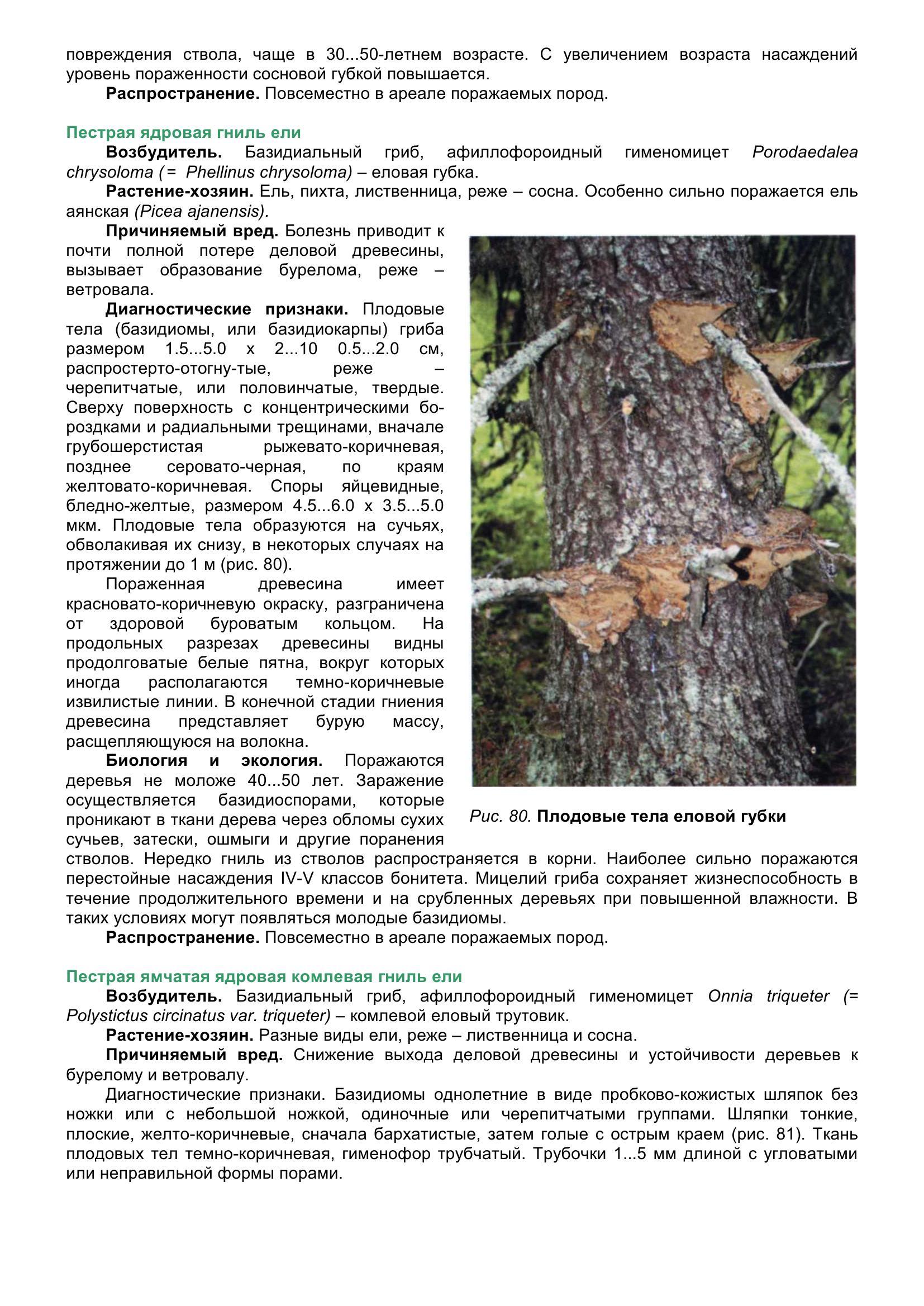 Болезни_древесных_растений_093.jpg