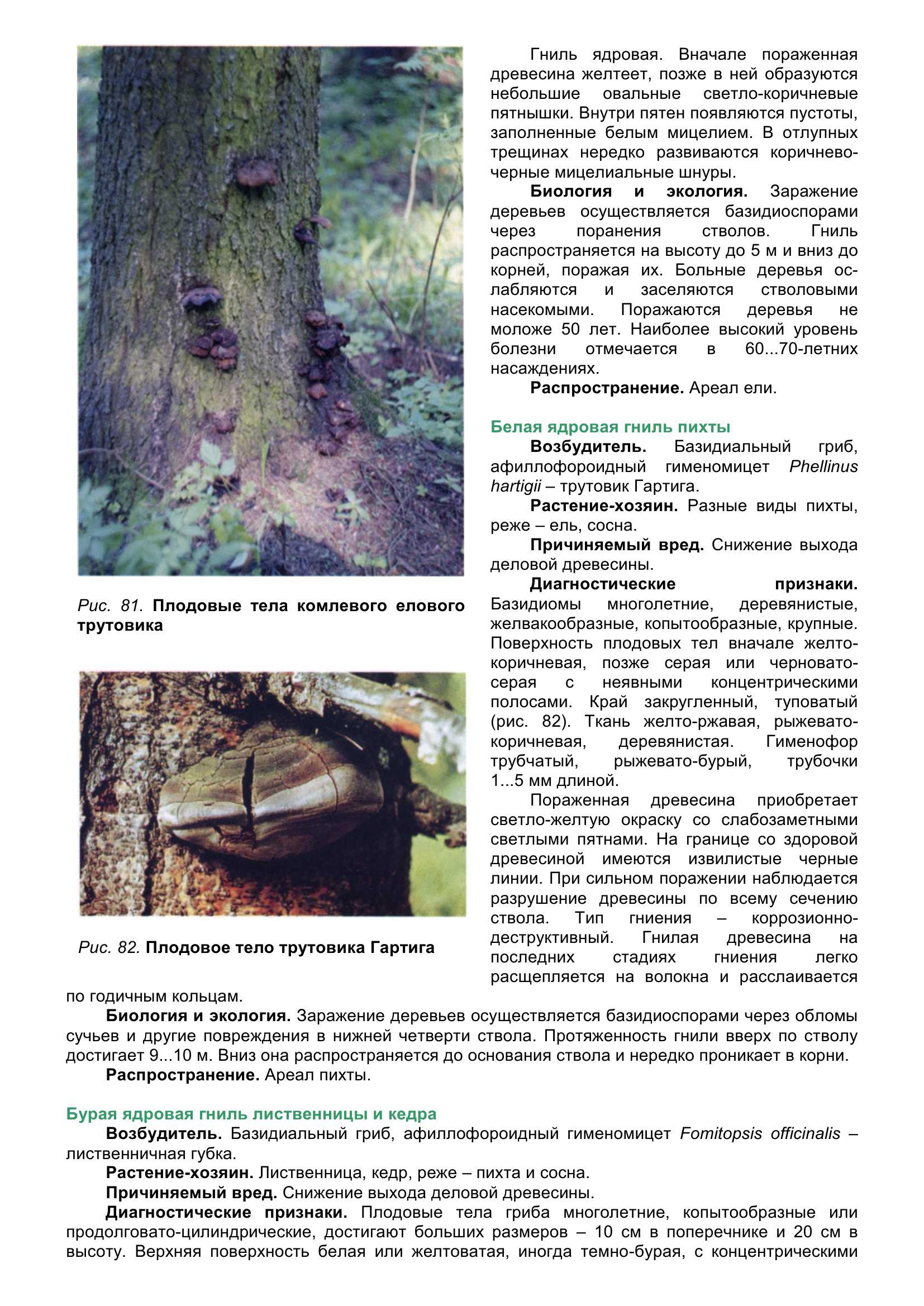 Болезни_древесных_растений_094.jpg