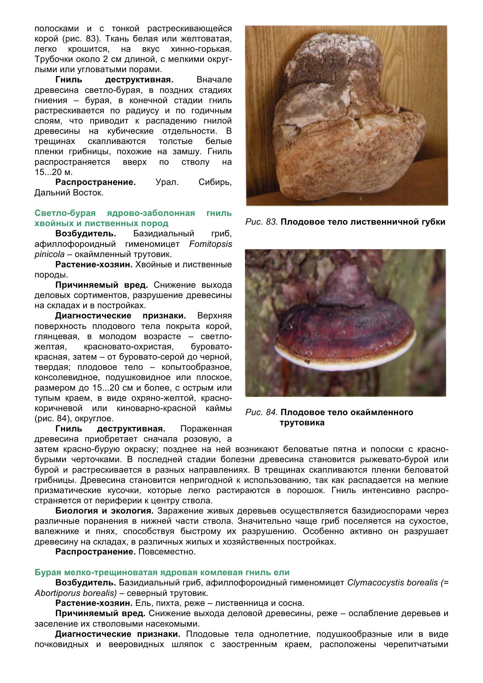 Болезни_древесных_растений_095.jpg