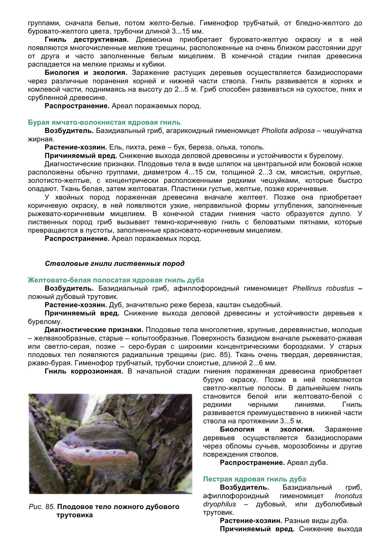 Болезни_древесных_растений_096.jpg