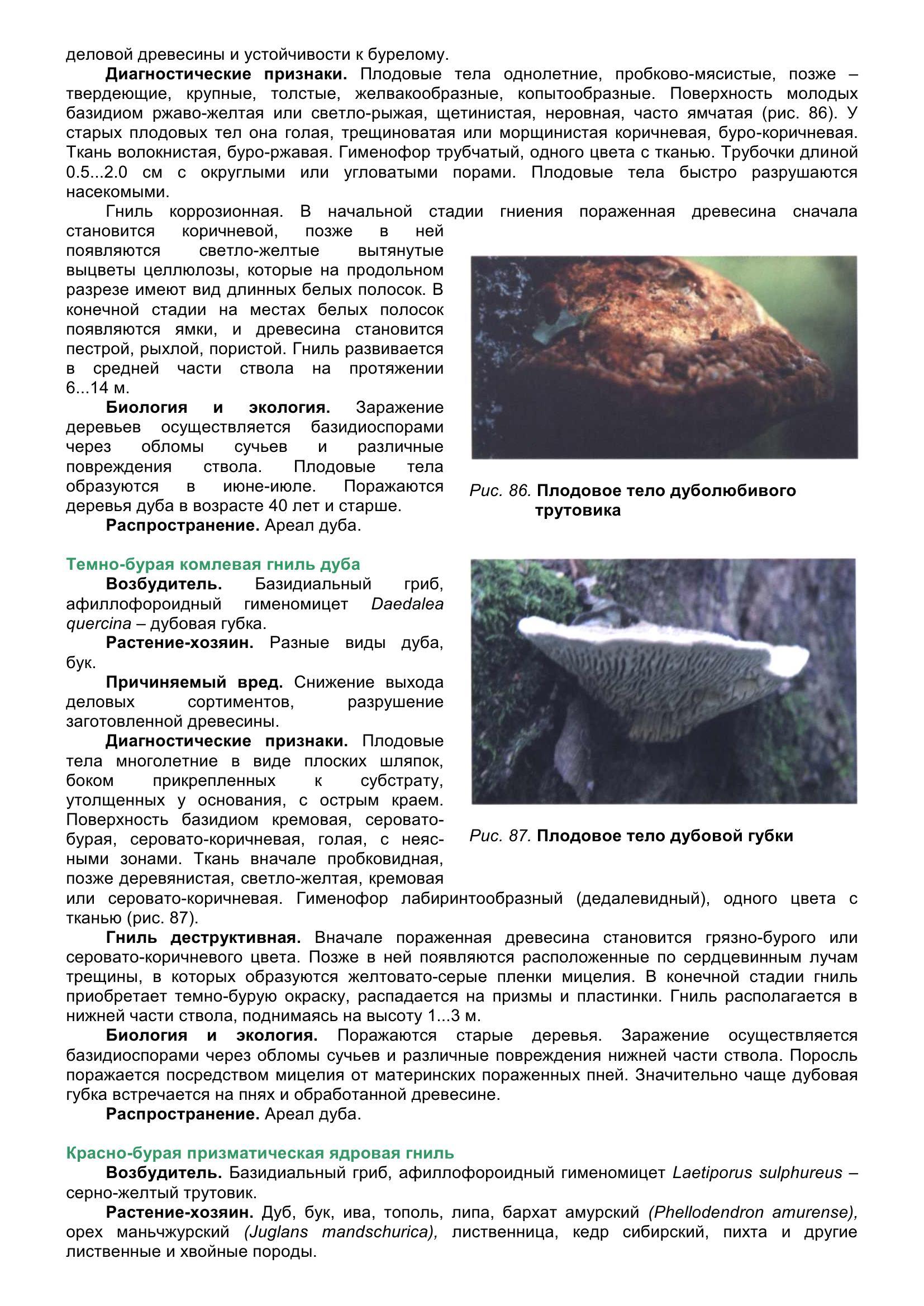 Болезни_древесных_растений_097.jpg