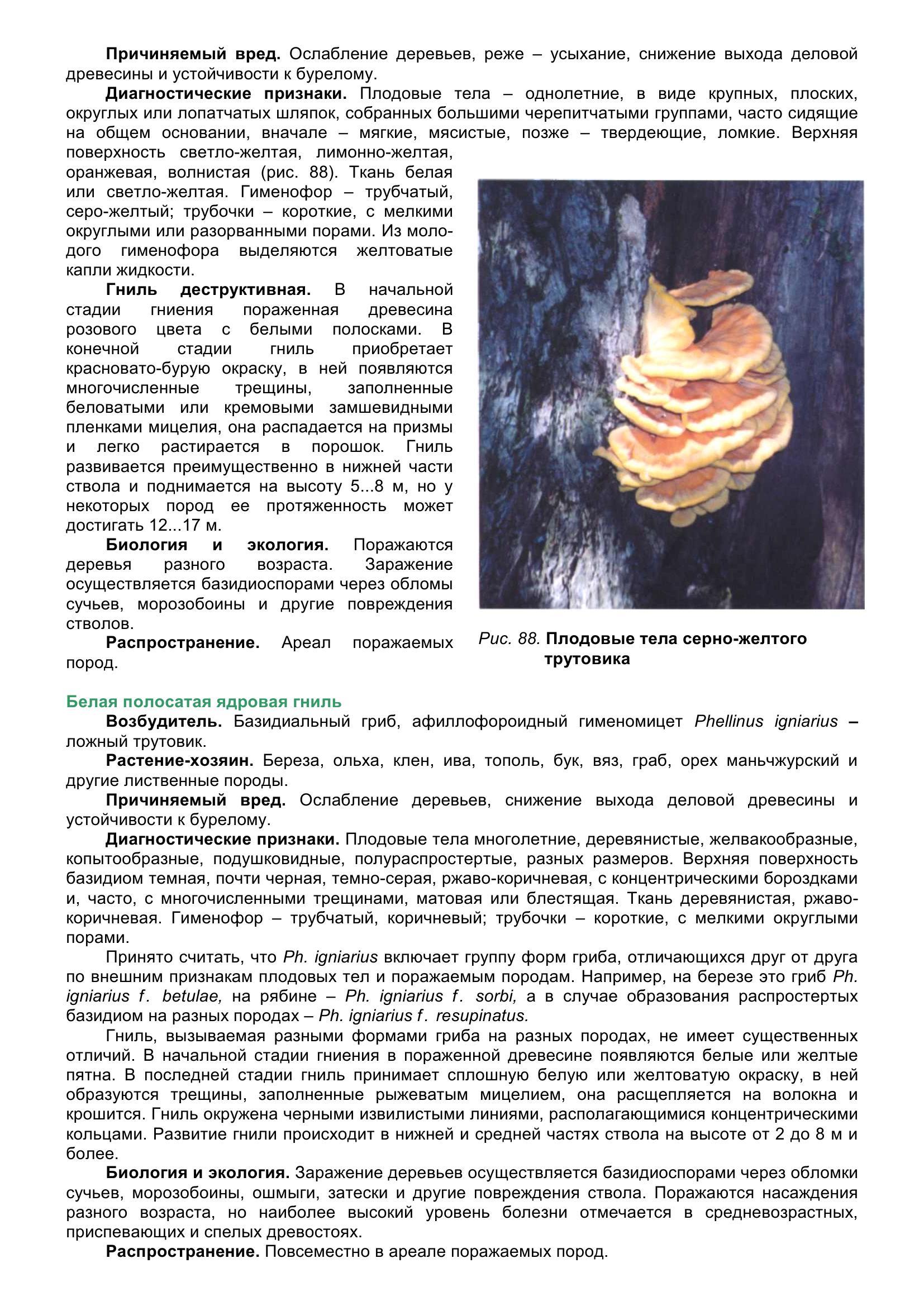 Болезни_древесных_растений_098.jpg