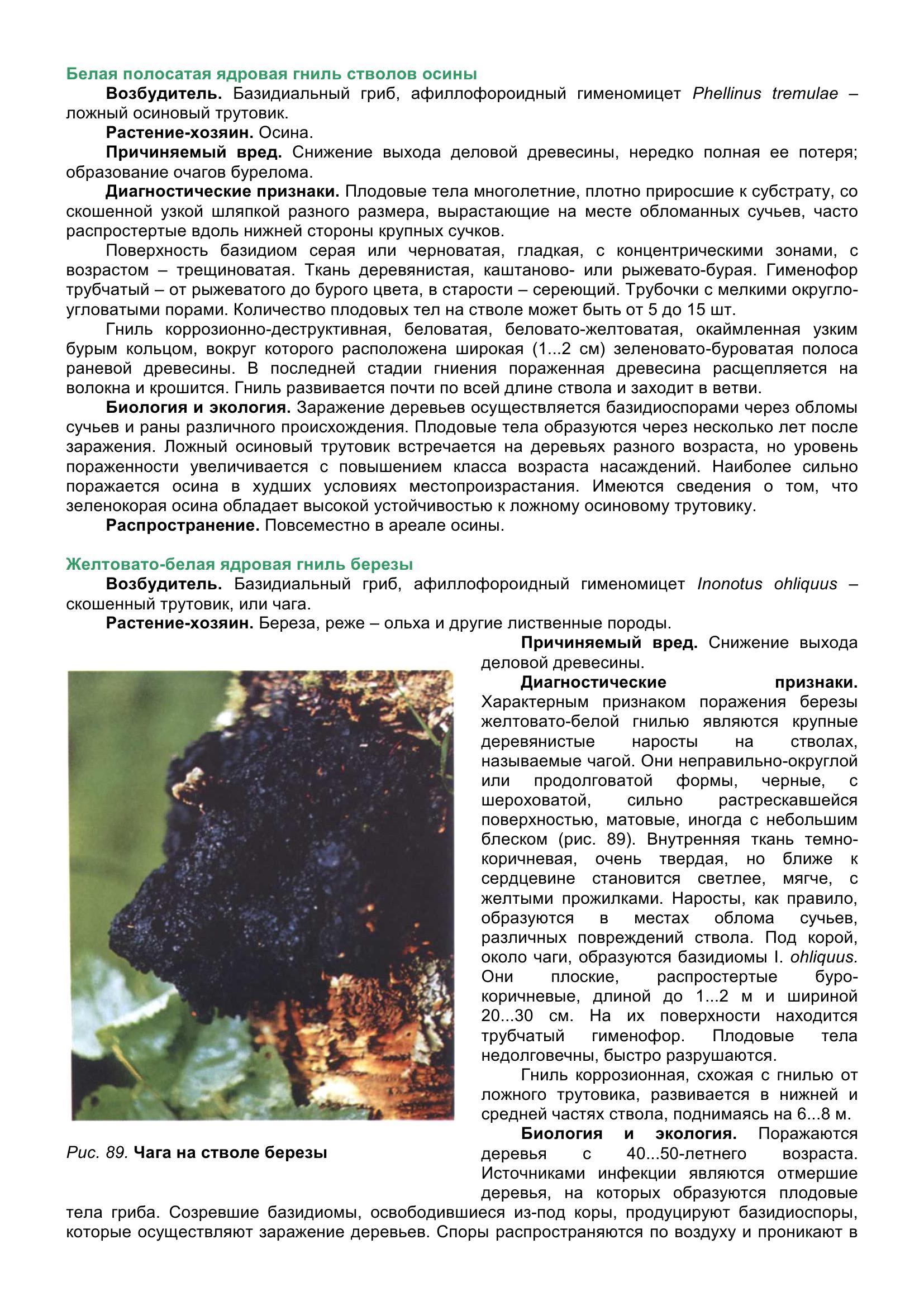 Болезни_древесных_растений_099.jpg
