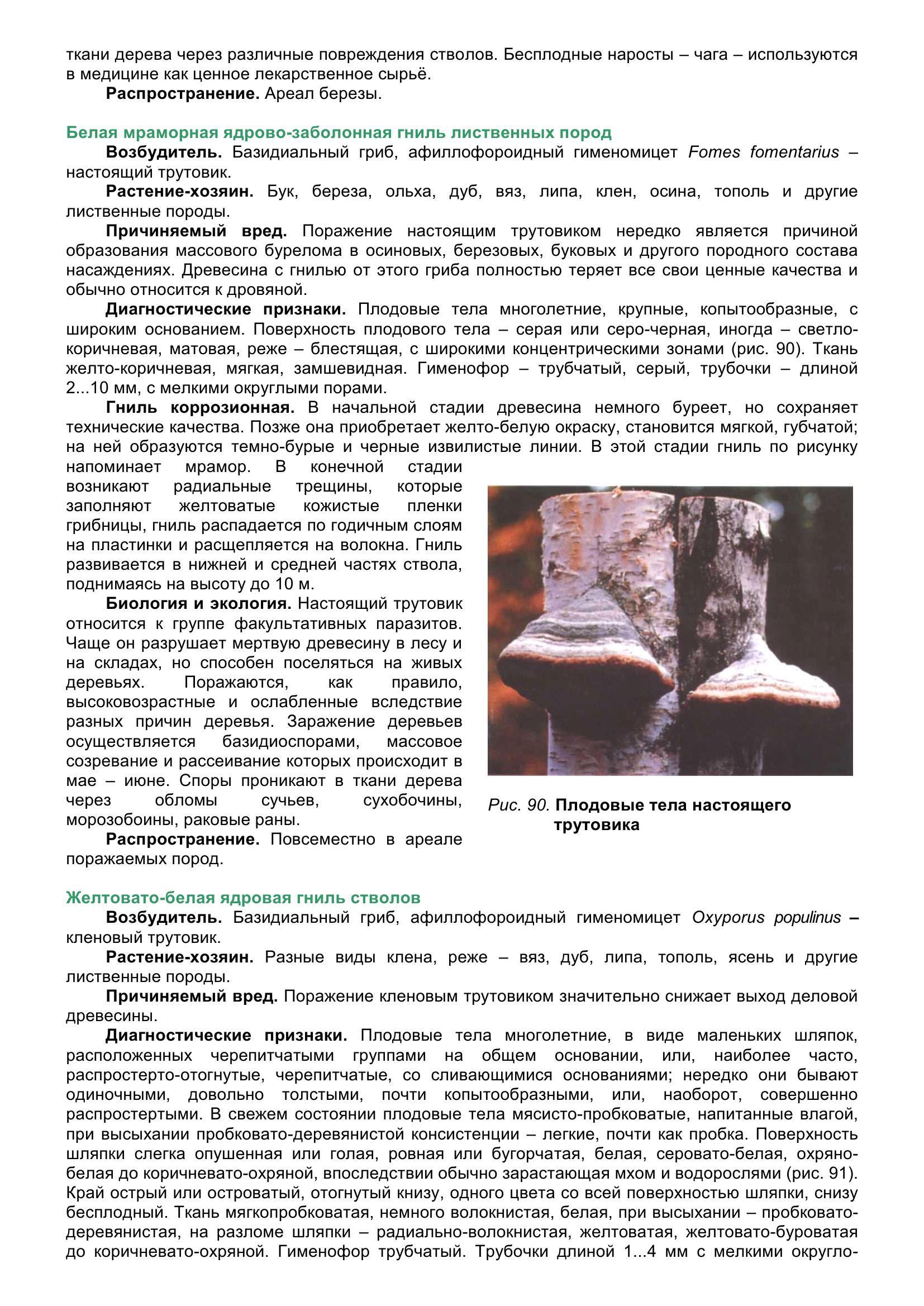 Болезни_древесных_растений_100.jpg