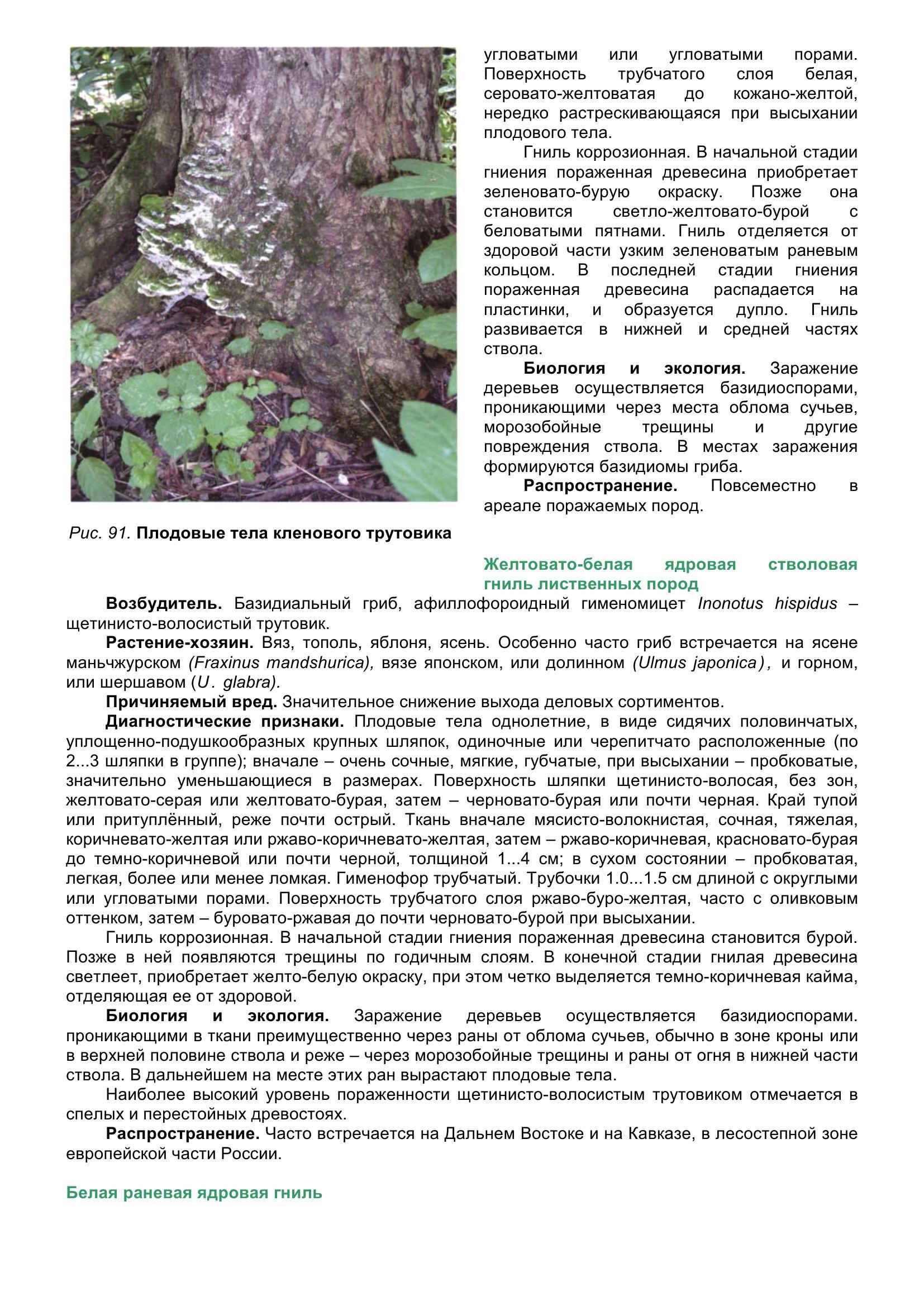 Болезни_древесных_растений_101.jpg