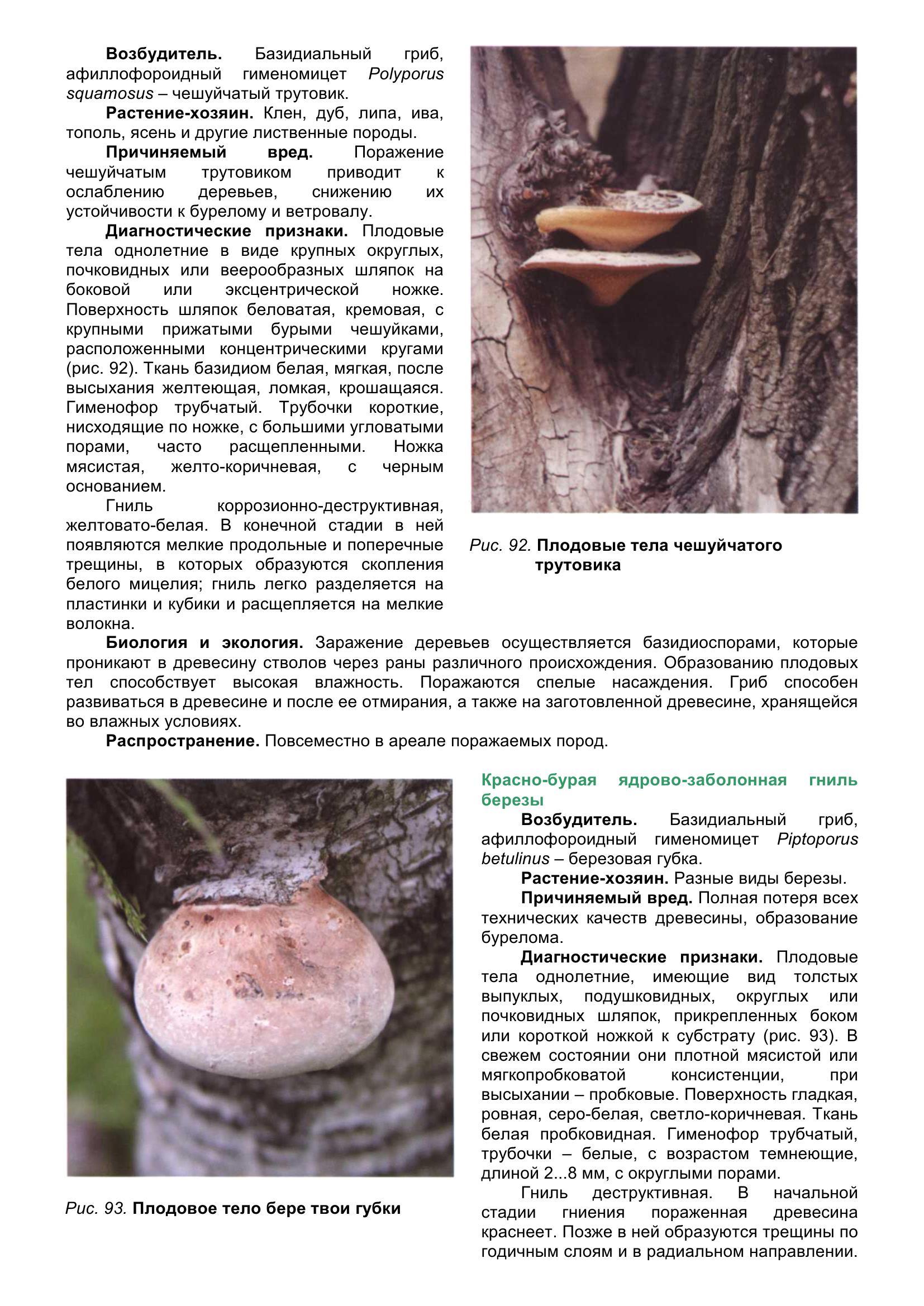 Болезни_древесных_растений_102.jpg