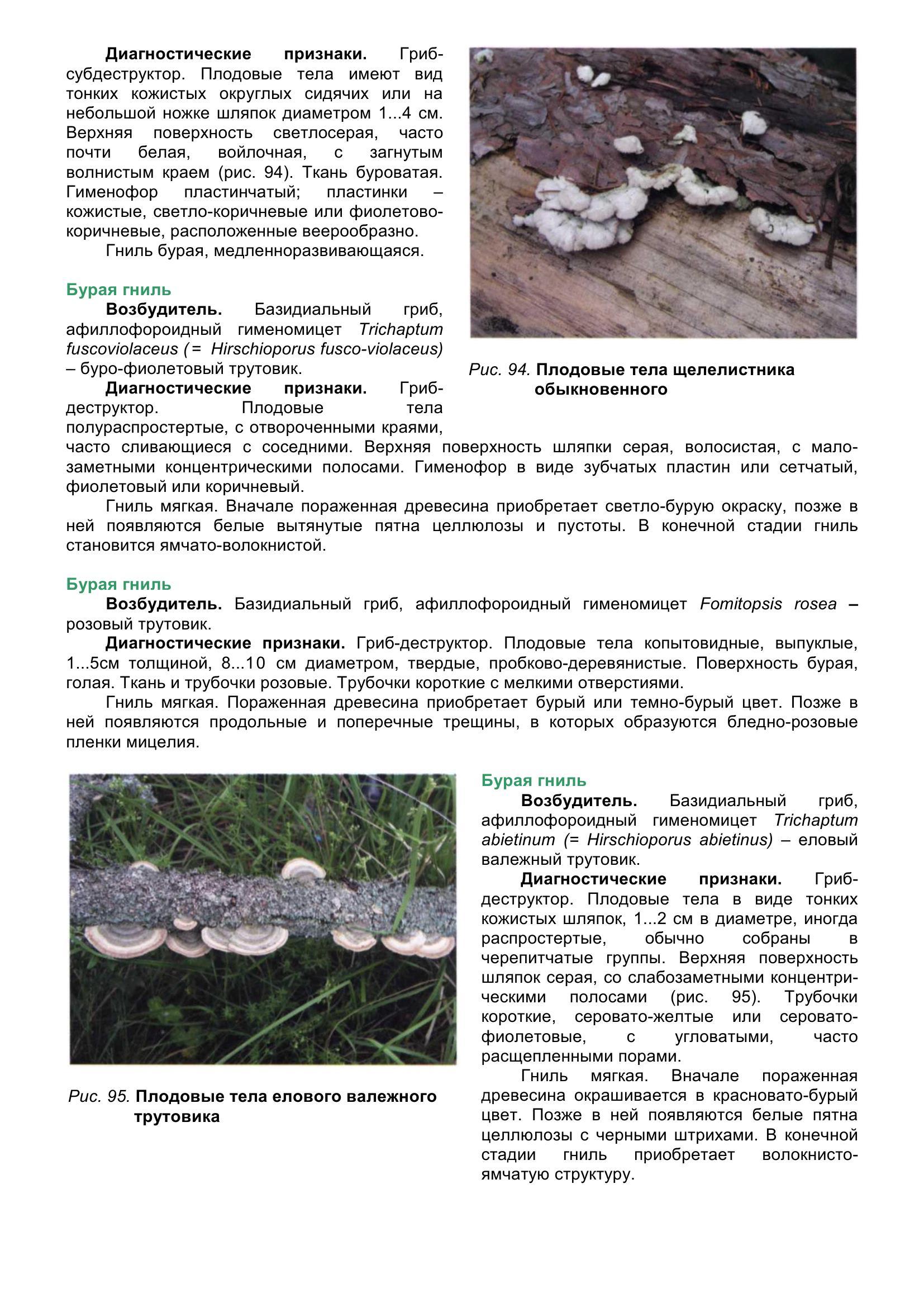 Болезни_древесных_растений_110.jpg