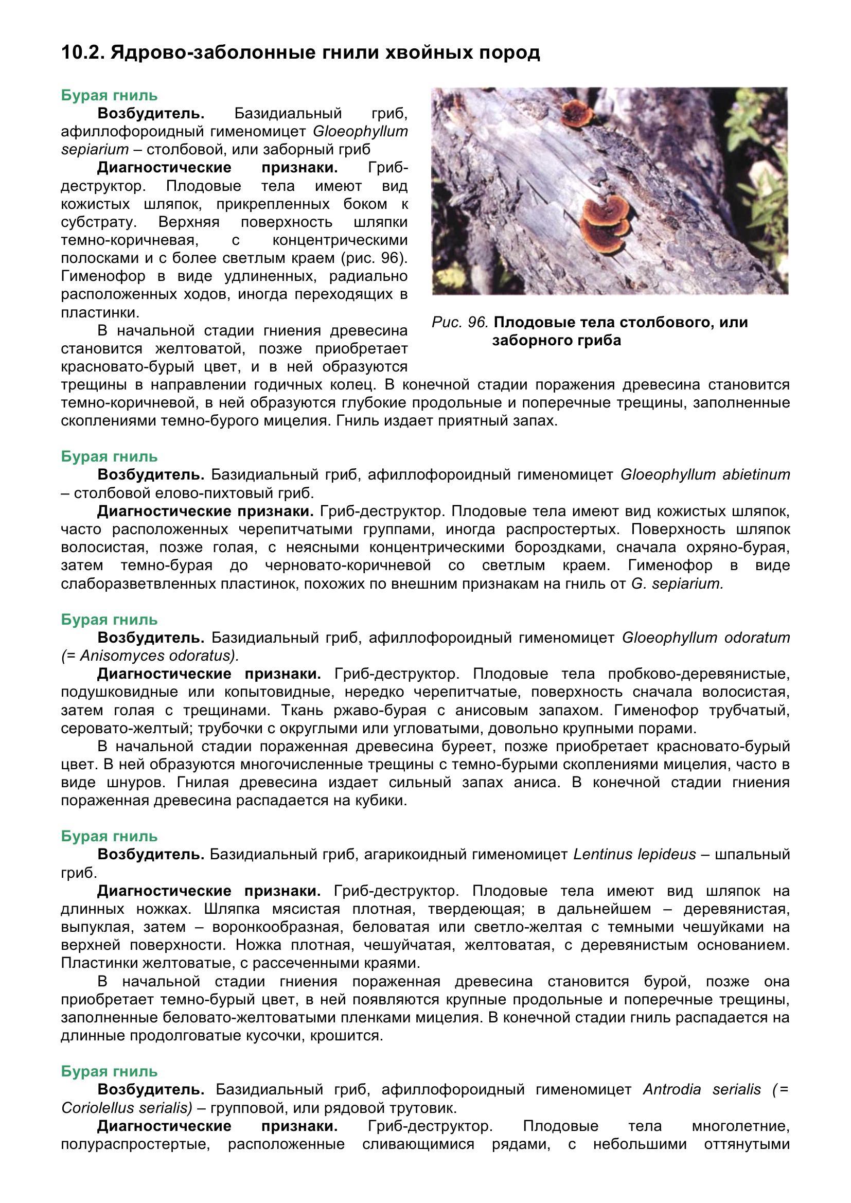 Болезни_древесных_растений_111.jpg