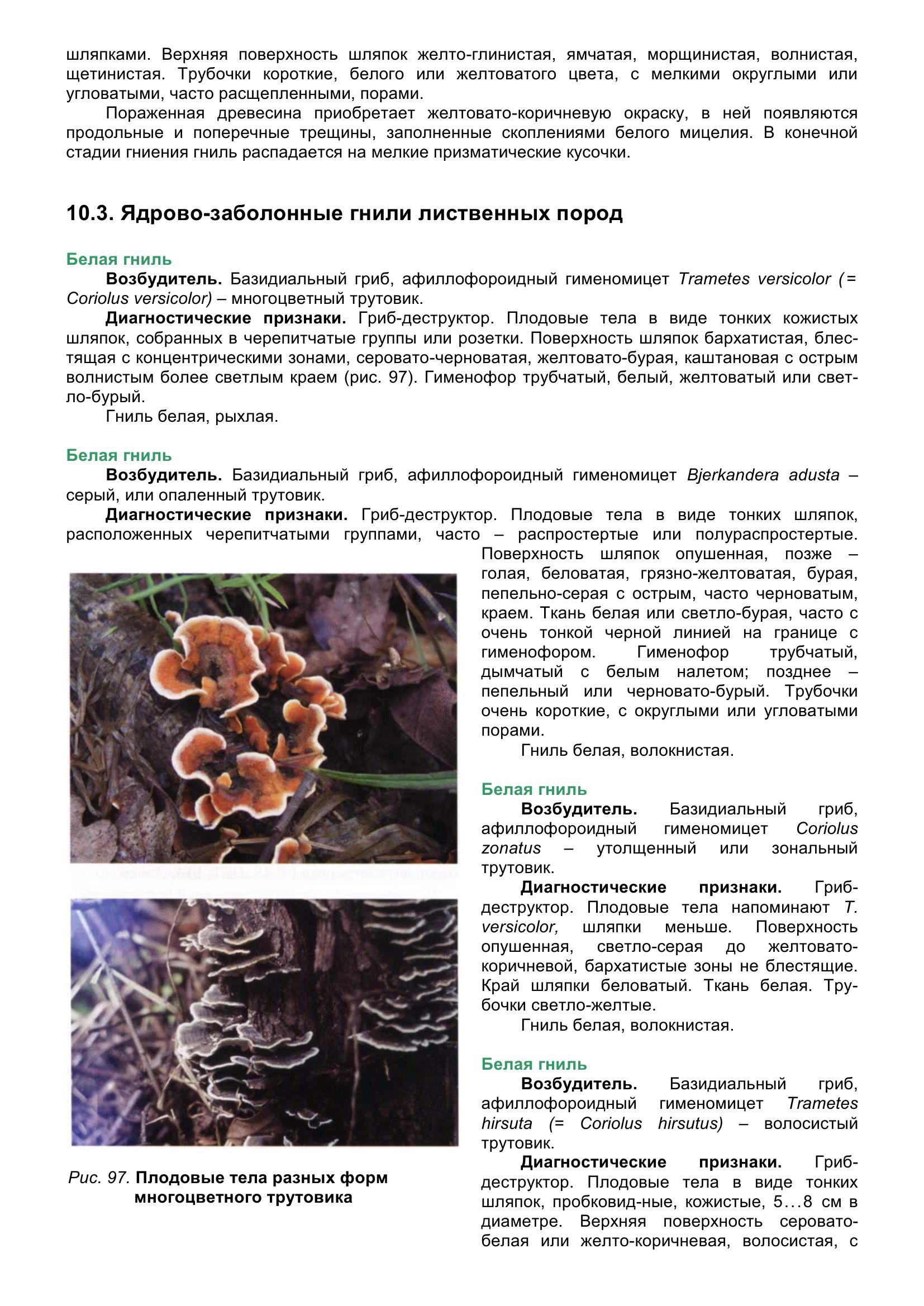 Болезни_древесных_растений_112.jpg
