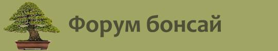 Форум Бонсай
