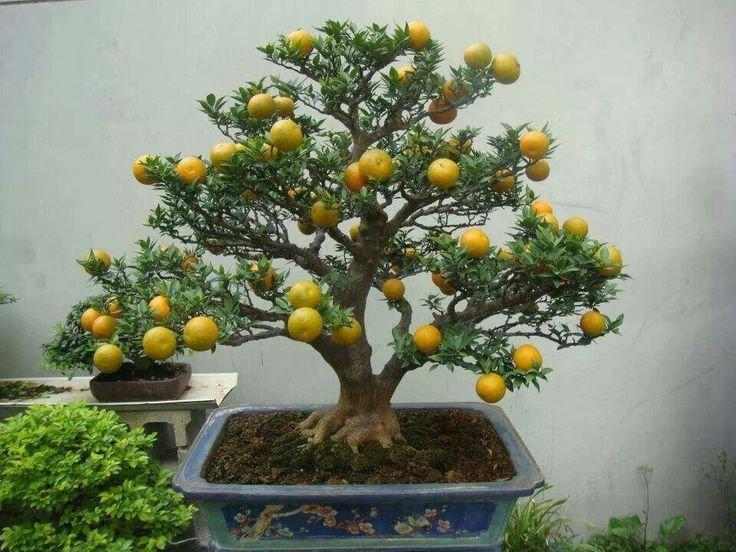 chto-takoe-bonsaj-formy-i-sovety-po-vyrashchivaniyu-45.jpg