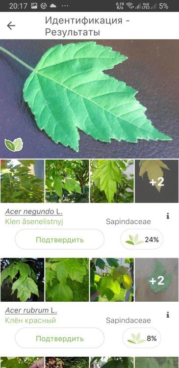 Screenshot_20210517-201743_PlantNet.jpg