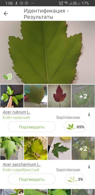Screenshot_20210518-010654_PlantNet.jpg