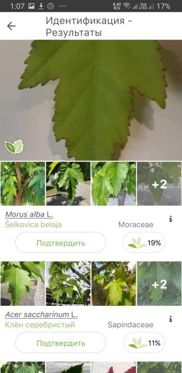 Screenshot_20210518-010753_PlantNet.jpg